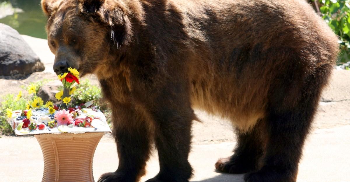 BRONX ZOO GRIZZLY BEAR