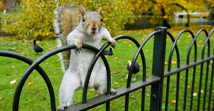 New York Squirrels Are Attacking People For Food Now