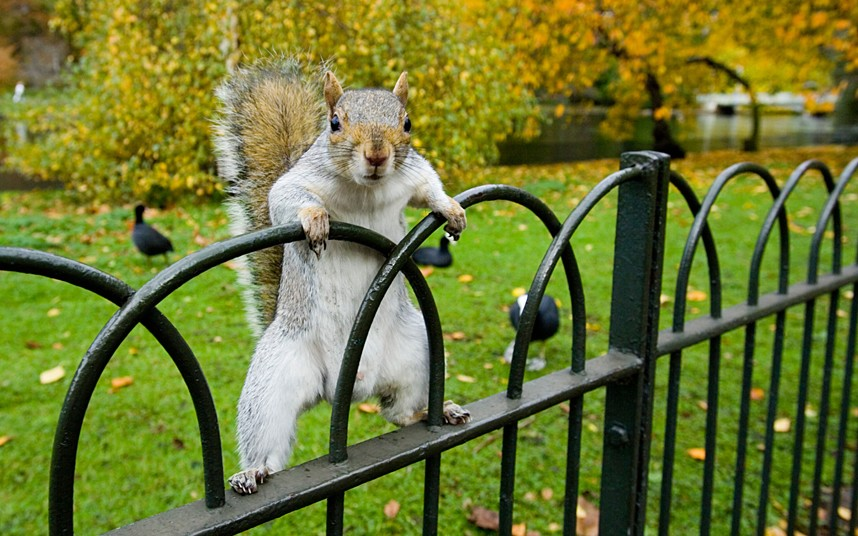 Squirrels in NYC Are Viciously Attacking People
