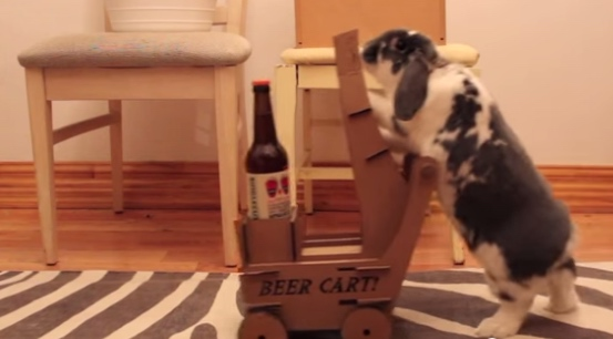 Man trains rabbit to fetch beers