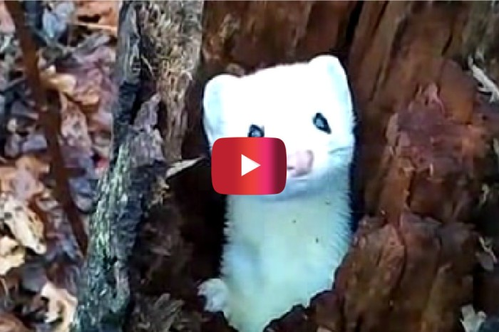 This rare woodland critter just popped out to say hello