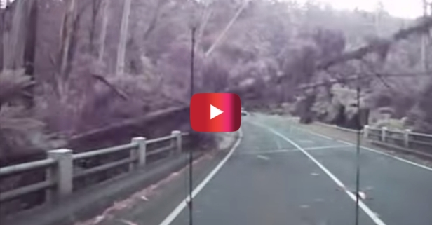 Watch as trees fall like dominoes on the road and miss a driver by THIS much