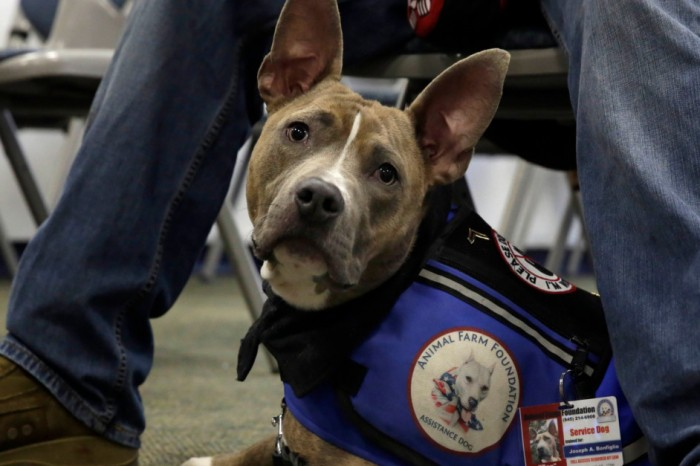 Texas senator cosponsors bill aimed at helping veterans with PTSD
