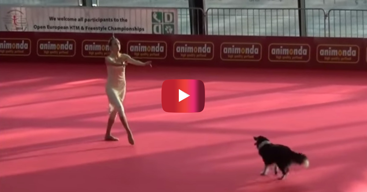 Dog performs a choreographed dance with her owner and it's beautiful