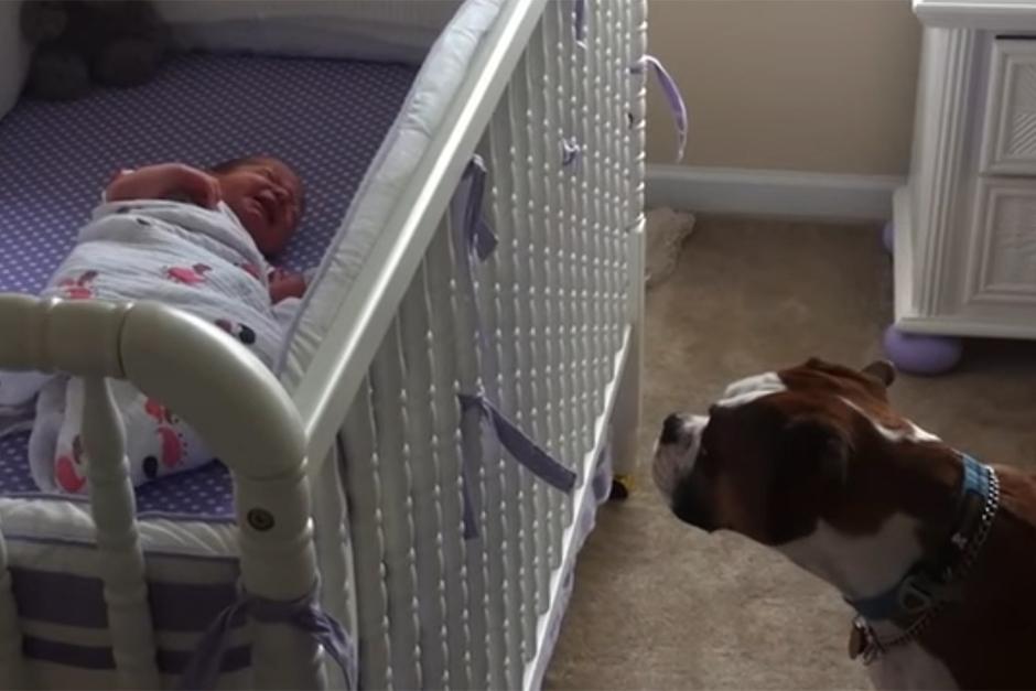 Dog Protecting Baby