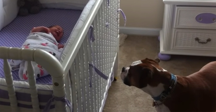Nothing is sweeter than this precious newborn's first day home — until you see the dog when she cries