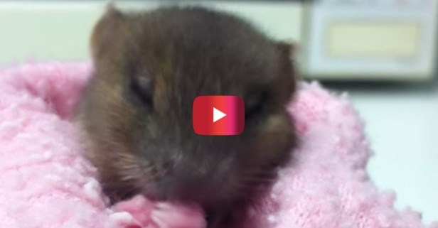 You usually wouldn't describe mice as cute but this itty, bitty mouse defies all odds