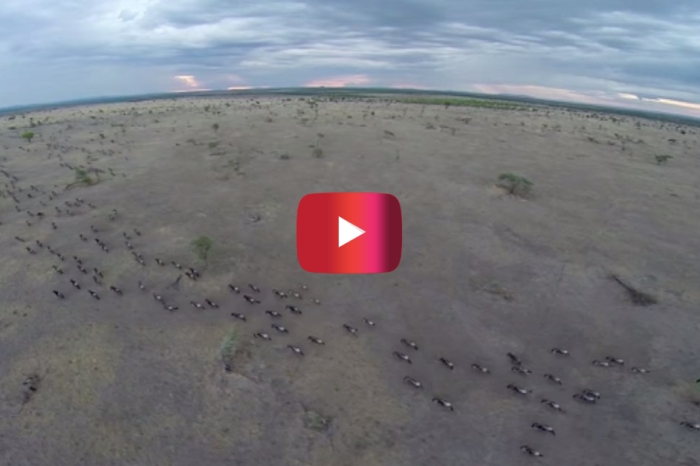 "Watch this drone show off the natural wonders of the Serengeti you haven't seen since ""The Lion King"""