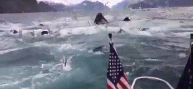 Boaters Gleeful at Sight of Humpback Whales in Feeding Frenzy