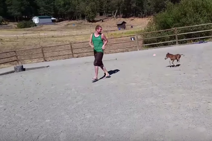 This miniature horse is the tiniest little thing you'll ever see gallop
