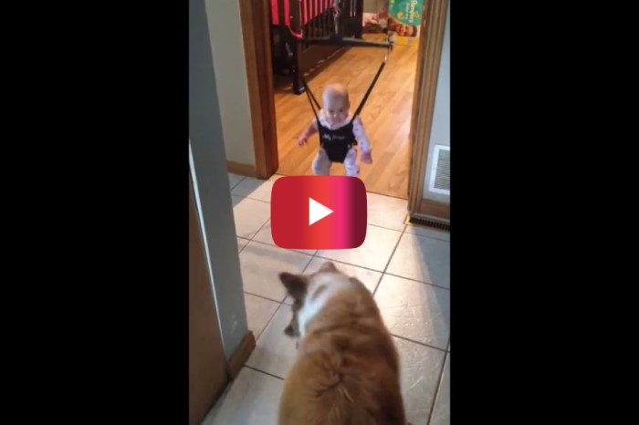 A dog teaching a baby how to jump is proof that dogs are man's best friend at any age