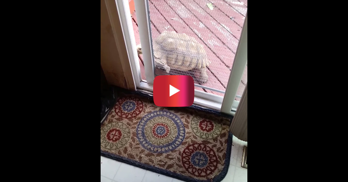 Statistically tortoises are slow movers but all speeds aside — this one sure is smart in the head