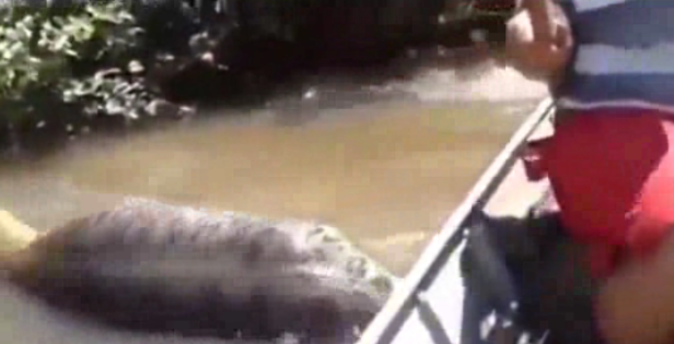 Feast your eyes on the biggest anaconda you've ever seen