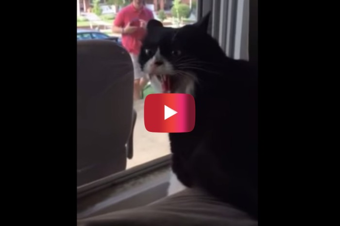 Demon cat screams in horror when he spots the new pet his owners just brought home