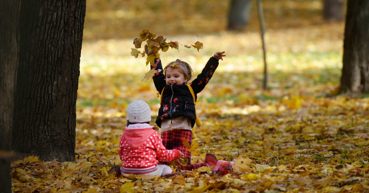 10 things to do with falling fall foliage