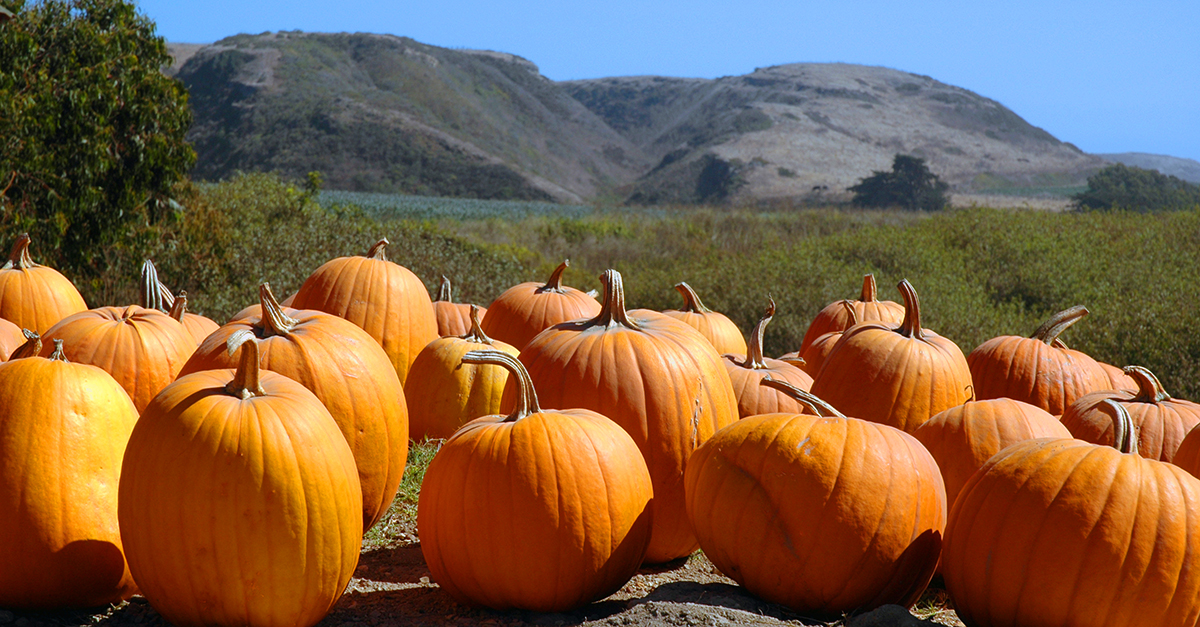 Even deodorant isn't safe from the pumpkin spice craze