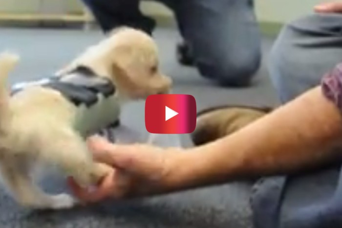 You'll be surprised what technology is helping this disabled pup learn to walk