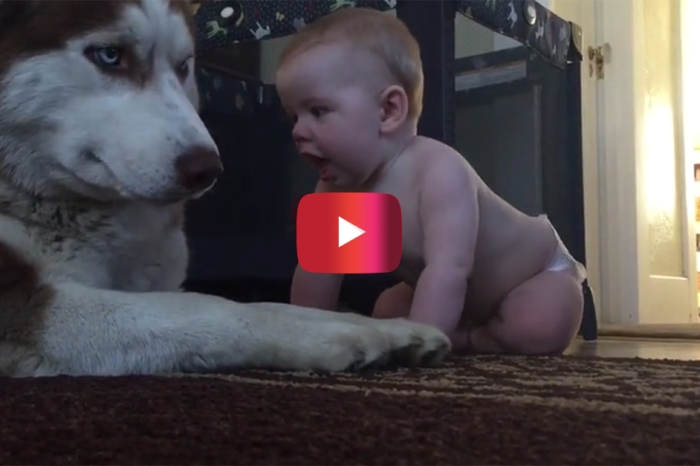 The moment this husky and baby become BFFs is the most adorable thing you've ever seen