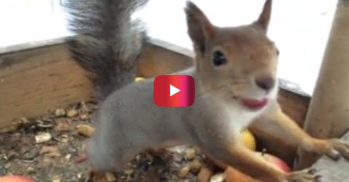 Man's kind gesture shows that squirrels, like us, are more friendly if you give them food