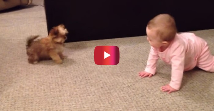 The conversation between this baby and puppy goes over adult heads, but we still appreciated the cute factor