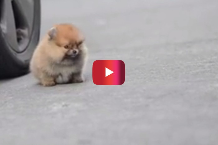This four-legged fluff ball will have you running to the pet store, pronto