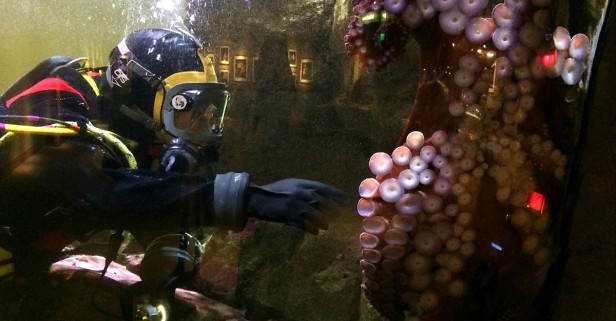Shedd Aquarium welcomes Illinois residents for free September 6-30