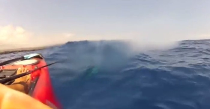 When this kayaker stuck his camera beneath the surface, he soon realized he wasn't alone