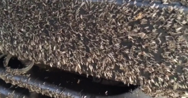 This guy drove through a swarm of blood-suckers and now has to pay the price