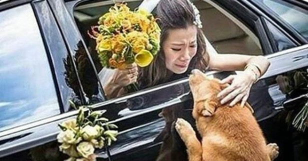 The emotional photo of a bride and her dog will make you kiss your loyal canine