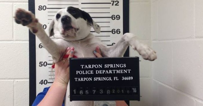 Florida dog gets mug shot taken after being turned into the police with no tags