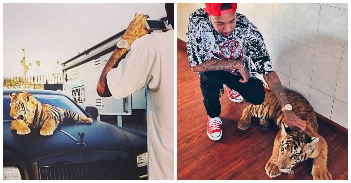 Tyga is facing some backlash for what he did with the pet tiger he wasn't allowed to keep