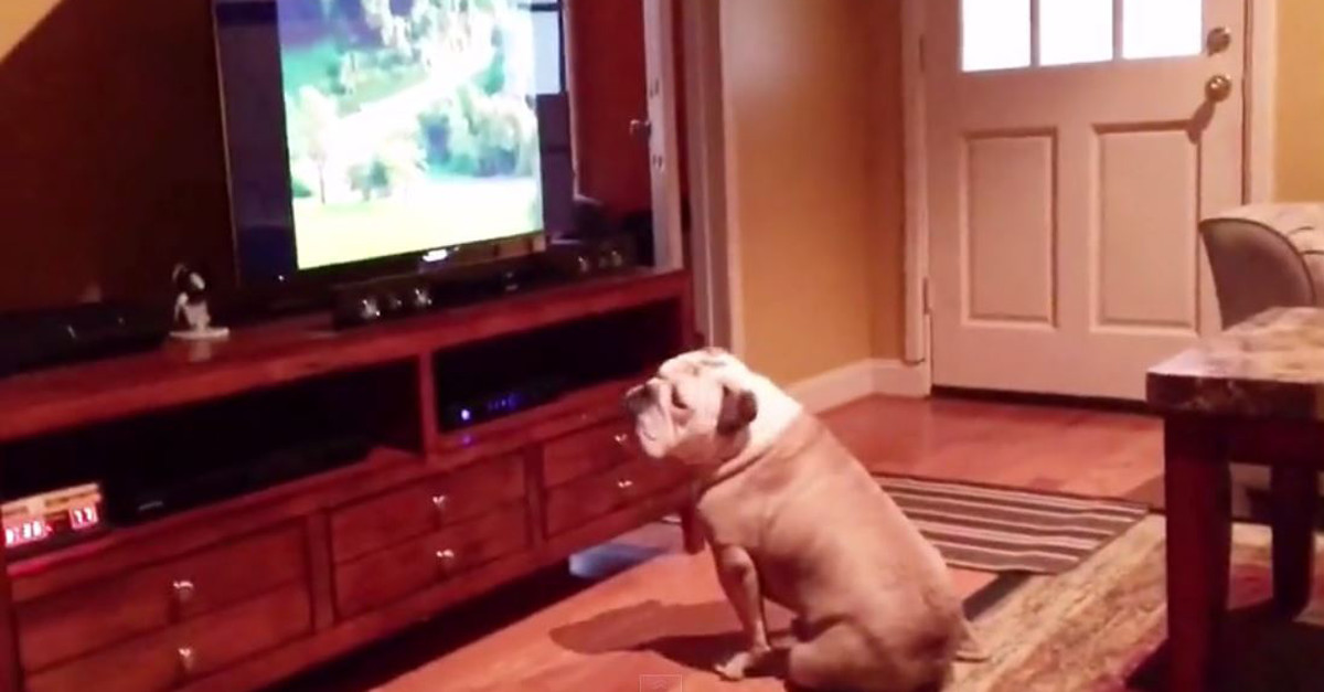 This man tried to warn his dog about what was going to happen on TV, but she didn't listen