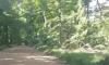 Hatchet Man Road