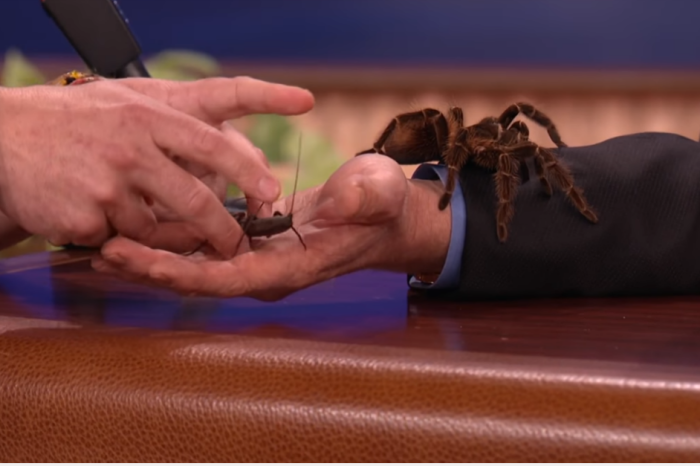 """The animal guy brought giant bugs onto """"Conan,"""" and nobody knew how to handle the impending doom"""