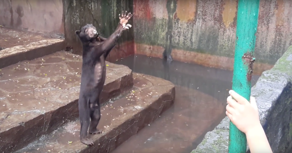 Footage of emaciated bears begging for food at a local zoo has left people heartbroken and horrified