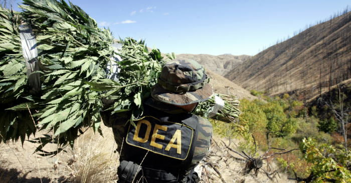 The DEA's latest move has many in the marijuana industry worried about the next four years