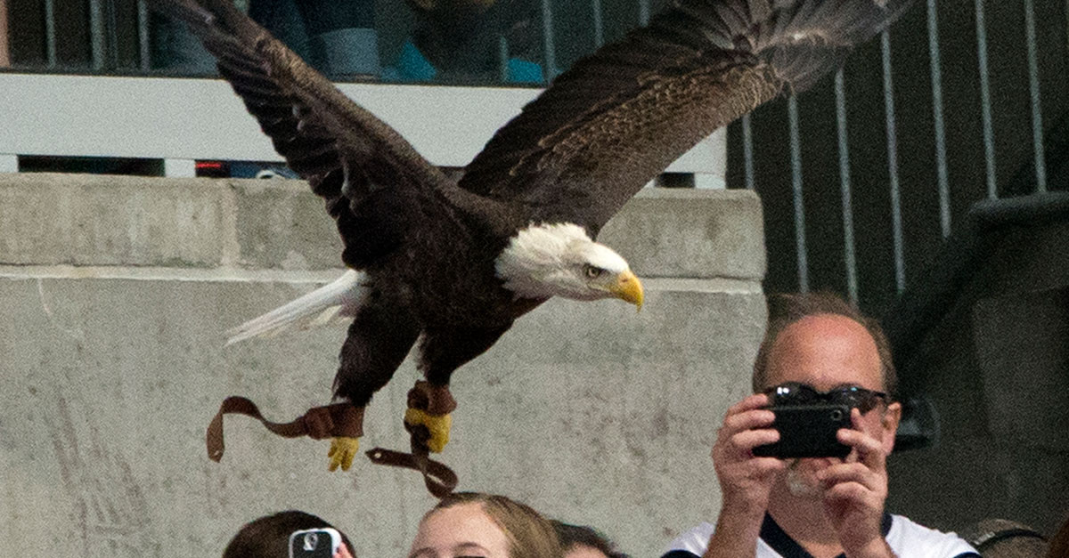 Houston's most patriotic suburb anxiously awaits bald eagle chick