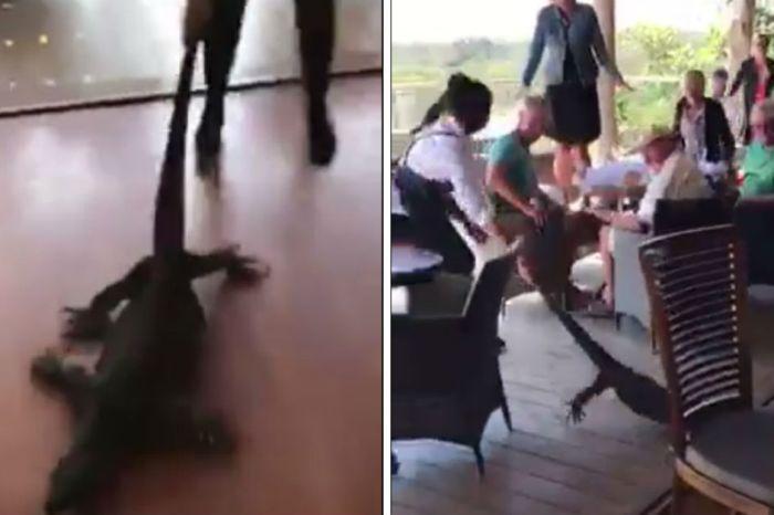 When an Australian resturaunt received an unexpected visitor, a waitress went above and beyond her job description