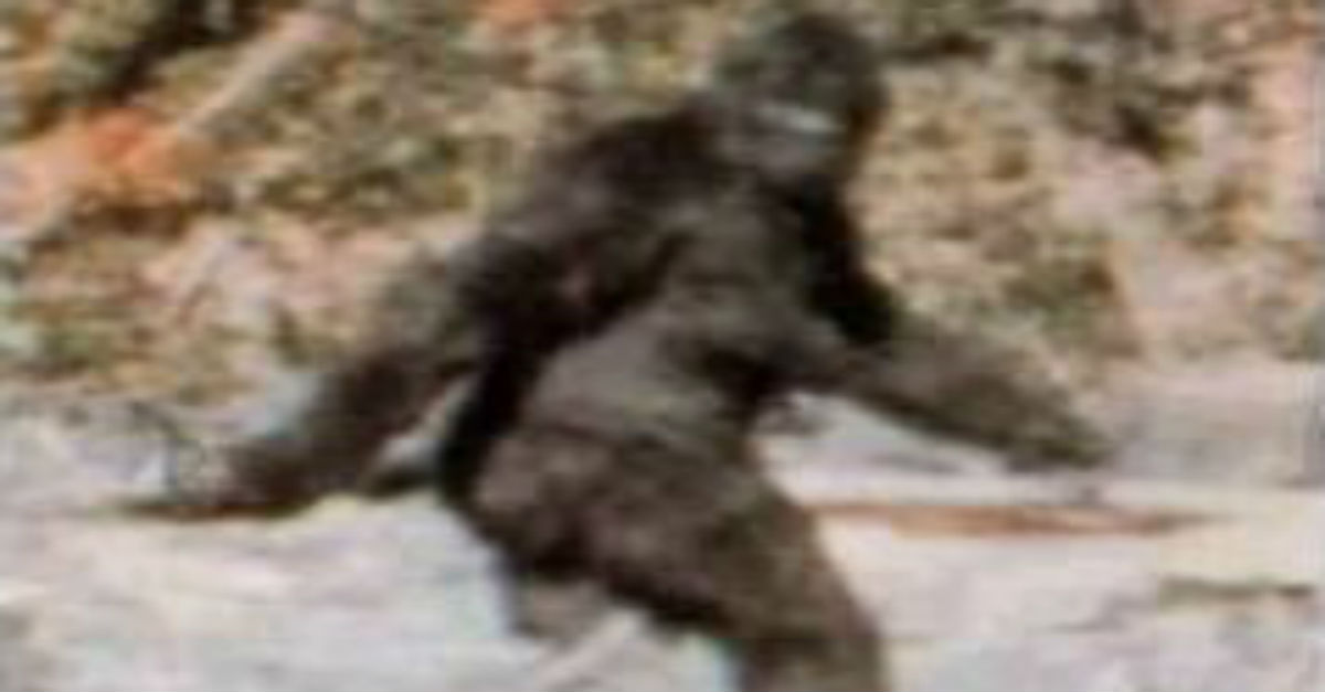 After a local college went Bigfoot hunting, a state senator introduced a bill nobody would have ever thought necessary