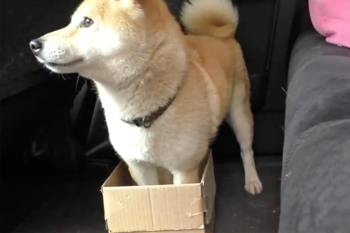 Owner Pranks Dog