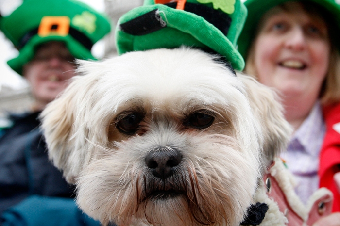 Photographic proof that your pets love St. Patrick's Day just as much as you do