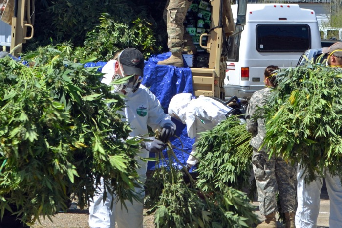 If history repeats itself, the Feds' recent seizure of 3,000 pot plants just outside of Houston could be one of their last