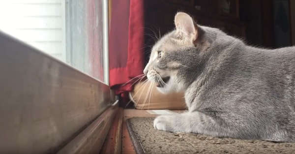 This chatty cat mumbles to himself while stalking birds from afar