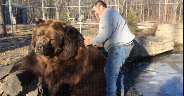 Watch what happens when this guy tries to hug a bear