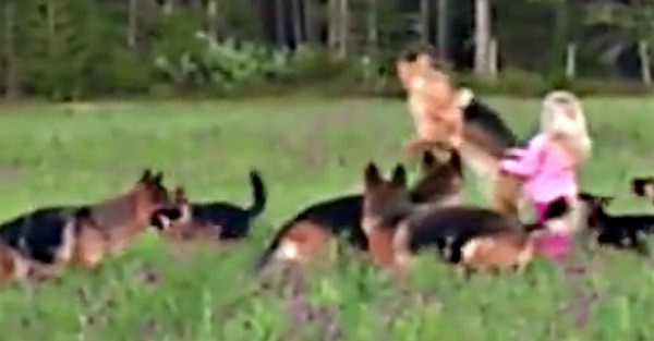 Watch this little girl play with 14 German Shepherds — it's pure joy