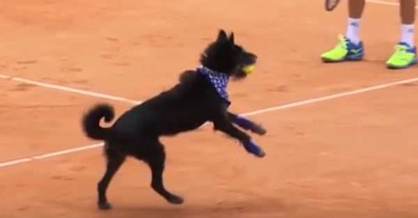 """These tennis pros can't get enough of their new """"ball dogs"""""""