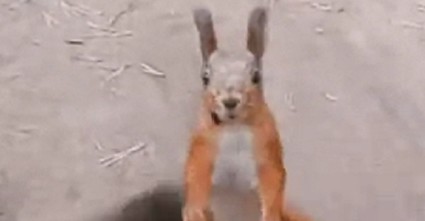 This squirrel has dance moves you will not believe