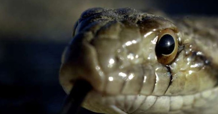 One snake's decision to slither into a substation knocked the power out for more than 20,000 people