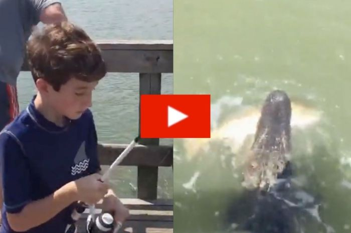Alligator Steals Kid's Catch Of The Day
