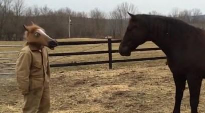 Horse Mask Meets Horse